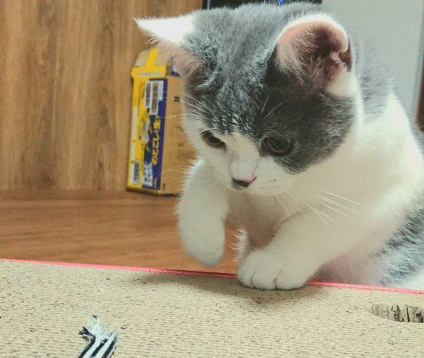 猫が家具で爪とぎ…やめさせる方法4つ