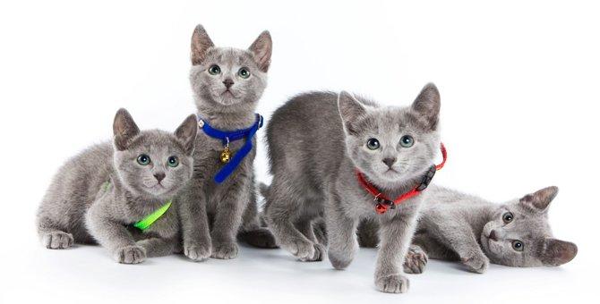 猫の首輪の作り方を解説!お手軽で安全な猫グッズ