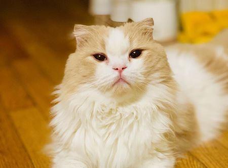 飼い主をお世話してくれている猫の行動4つ