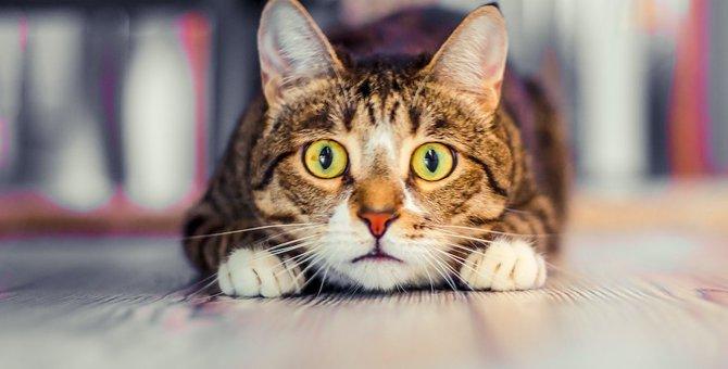 猫に『不信感』を与えてしまう飼い主の行動5つ