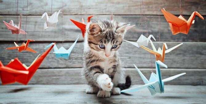 猫との遊びのポイントとオススメのグッズ