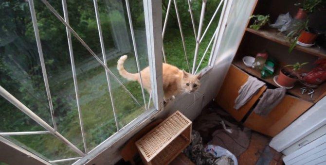 変わった形の鉄格子も、猫ちゃんの手にかかればこの通り