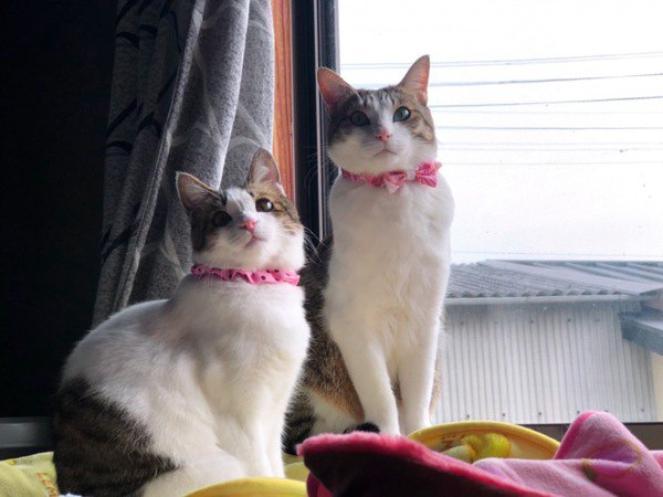 猫を多頭飼いをする時、必ず知っておきたいコツやメリット・デメリット