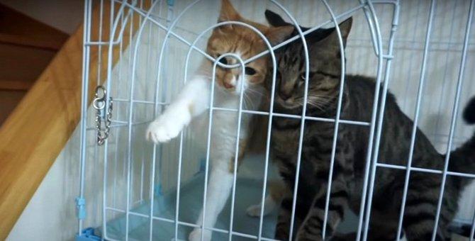 わちゃわちゃ!ちゅーるを前にした猫ちゃんたちのリアクション♡