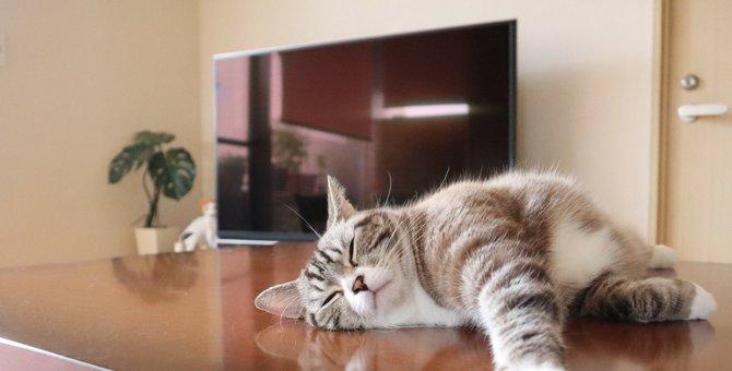猫は何時間眠るの?『よく寝る』3つのワケ