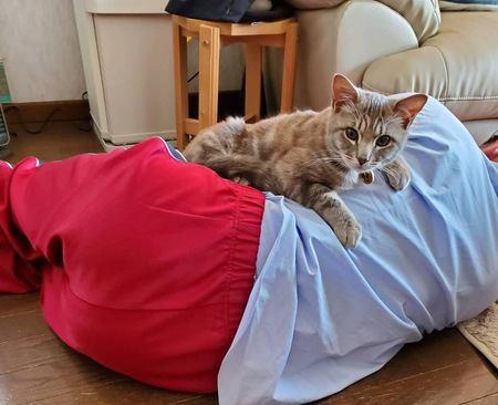 猫が「かまってほしい」と思っているタイミング4つ