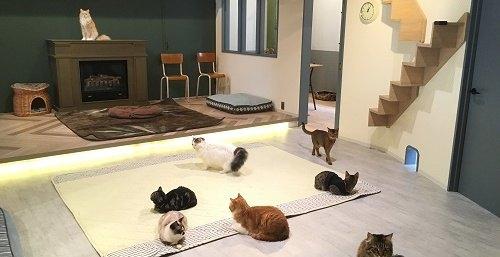 名古屋大須の猫カフェ情報!ほっこり癒しの空間で可愛いにゃんこと遊ぼう♪