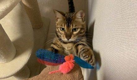 猫の『テンションが上がる!』楽しい遊び方7つ