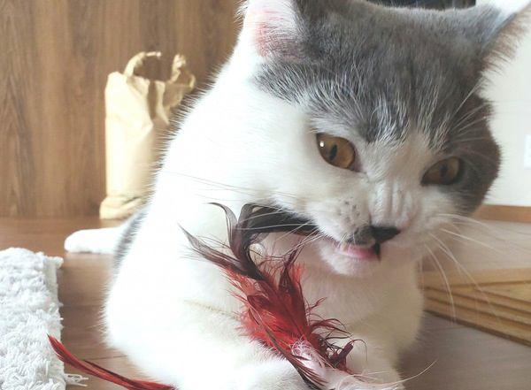 飼い主が寝ている時に猫がよくする行動5つ