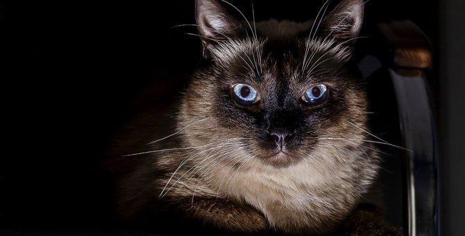 飼い主が寝ている間、猫がこっそりやっている『5つのこと』