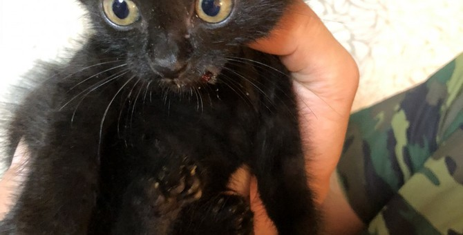 草むらで鳴いていた子猫をミルクでおびき出し救助!