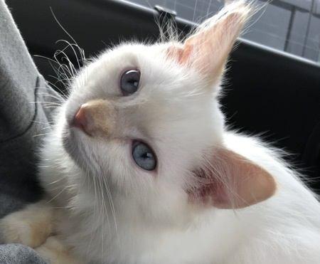 外出から帰ったときに猫が足にスリスリする理由3つ