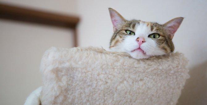 猫の口から牙がはみ出てるのは大丈夫?