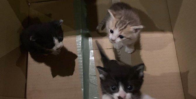 """段ボールで無く3匹の子猫…保護して知った""""ペットを迎える責任""""とは?"""