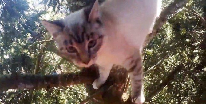 高木の上で2日間立ち往生…カラスに襲われている猫を助けて!