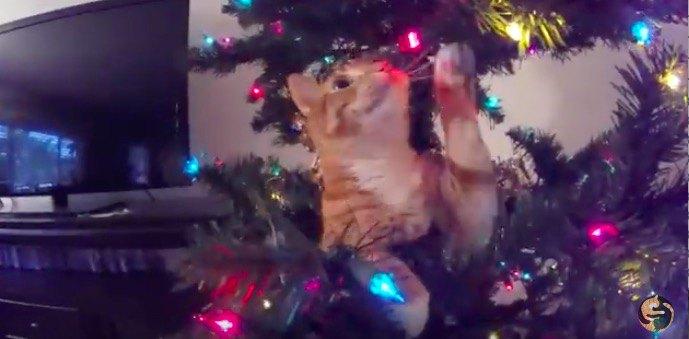猫飼いクリスマスあるある。クリスマスツリー設置に苦労する男性