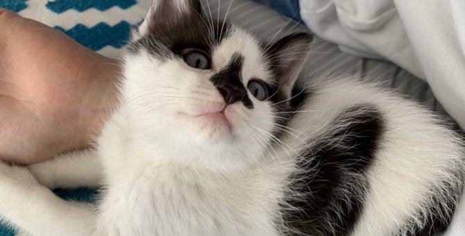 猫が高い声でゴロゴロ言ってる時の3つの気持ち