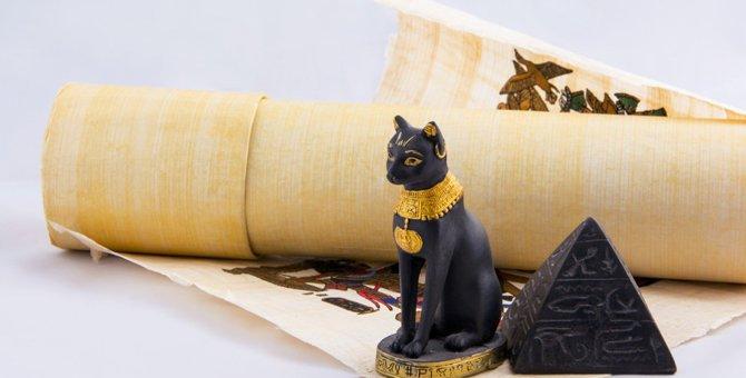 猫の誕生の歴史と、人と生活するようになった理由