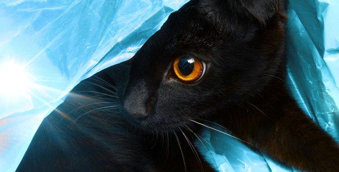 猫のいる家で『紙袋・ビニール袋』を扱う時に注意すべきこと3つと対策