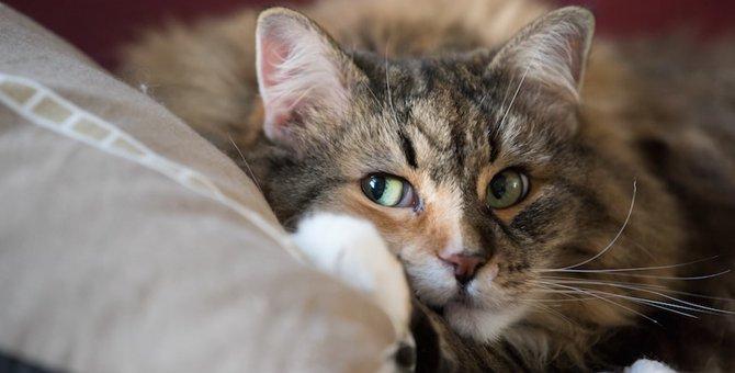 飼い主をチラ見する猫の気持ち7選