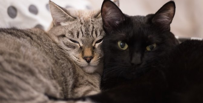 新参猫ちゃんを迎えるには?猫の多頭飼いを始めるポイント3つ