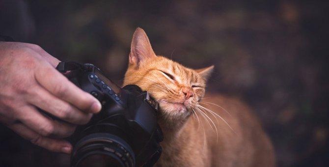 猫がカメラを嫌がる4つの理由