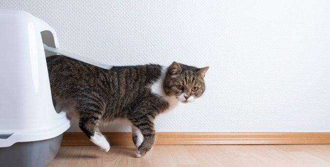 愛猫は大丈夫?注意すべき排泄するときの仕草3つ