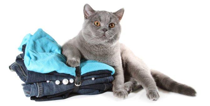 猫のTシャツが可愛い!宇宙コラボやおしゃれなデザインまでおすすめ商品をご紹介