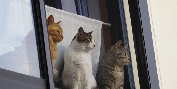 猫の『放し飼い』で起こる危険な4つのリスク