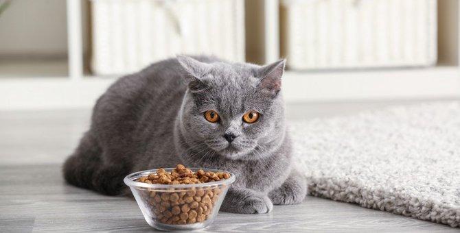 猫の『置き餌』がNGな4つの理由!おすすめの留守番対策とは?