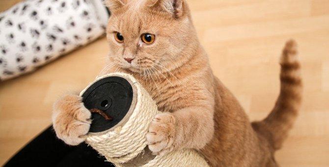 抱っこができる猫カフェ5選!お店を利用する時に配慮するべき事