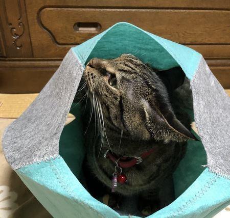 猫がくんくんにおいを嗅ぐ時の心理3つ