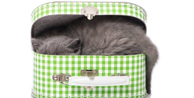 猫が家の中でいなくなった!探す時の4つのポイント