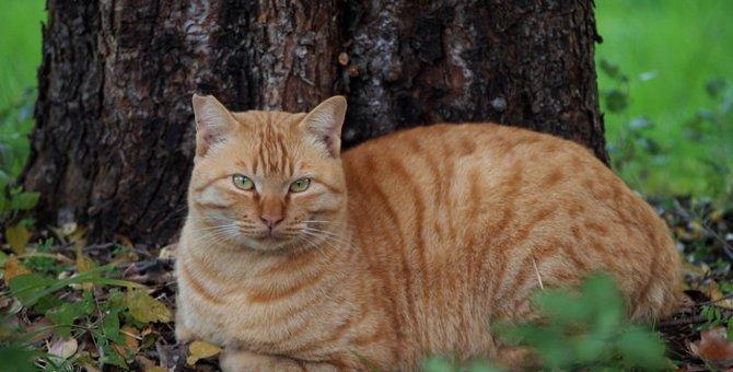 猫の体と習性についてのそれぞれの特徴