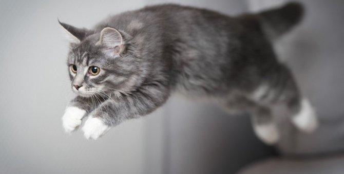 猫の『関節症』ってどんな病気?知っておくべき予防法5つ