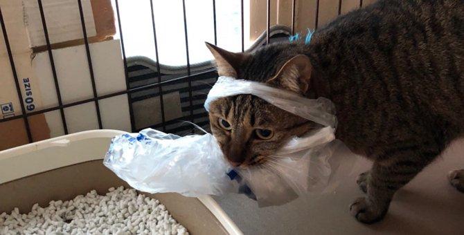 猫が獲物を発見した時に見せる仕草や行動