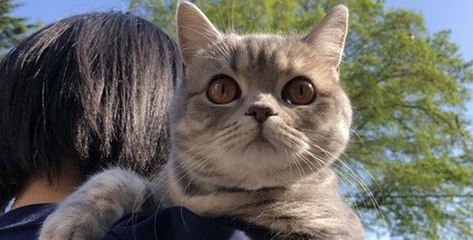 猫を飼うことでもたらされるプラスのこと7つ