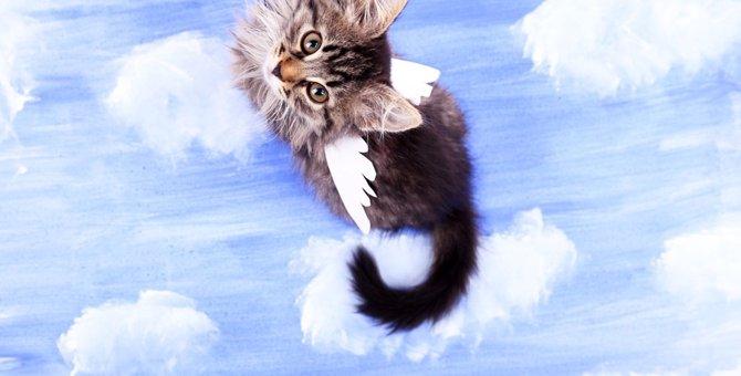 猫に天使の羽が可愛すぎる!かわいい写真19連発!