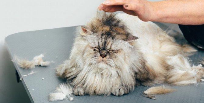 猫のトリミングの料金のサービス内容や注意点、自宅で行う方法とは
