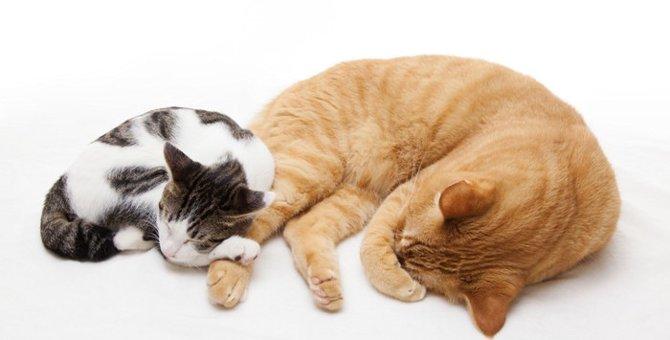 猫は単独行動が好き?複数匹でいても平気なの?