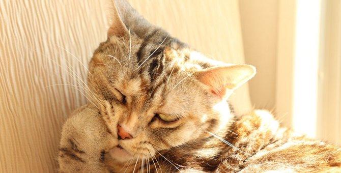 猫が自傷行為をする理由と対処法3つ