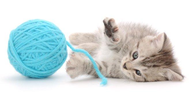 猫はどんなおもちゃが好き?選び方のポイント