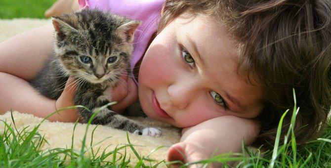 猫を飼うのが大変である5つの理由