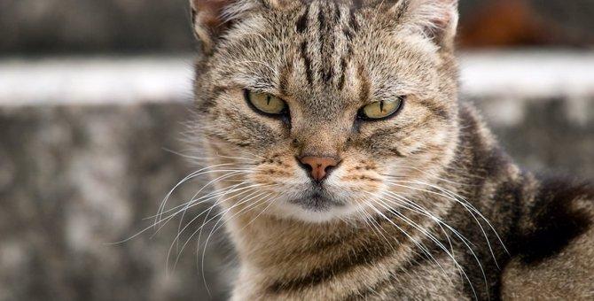 猫に絶対与えてはいけない『果物』4選!愛猫が亡くなってしまう可能性も…?