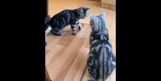 飼い主の悲痛な声を背にニャンプロに夢中な猫さんたちが話題沸騰中!