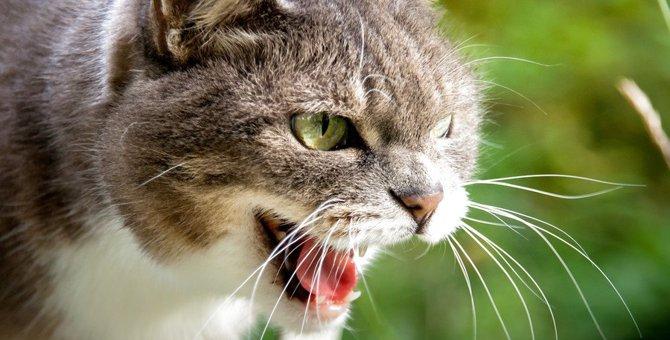猫が『攻撃的になっているとき』に注意すべき3つのこと!上手に気をそらす方法とは?