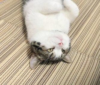 猫が飼い主にする思わせぶりな仕草5選