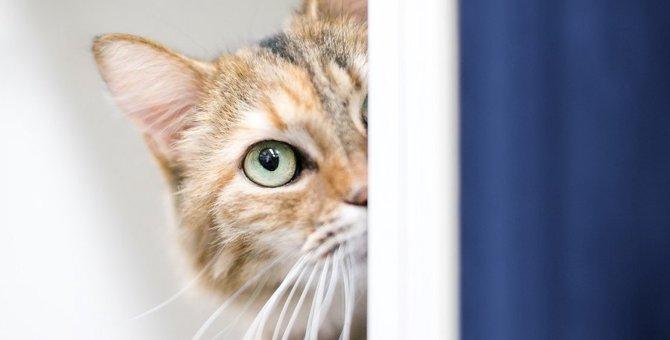 『人見知りな猫』がする行動3選!日々の生活でできる克服法とは?