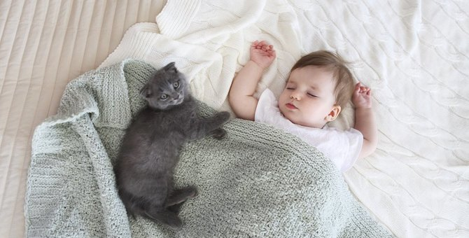 猫に話しかける時は「赤ちゃん言葉」がいいらしい!その理由とは?
