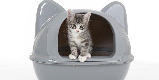 システムトイレなのに猫臭い…原因や対処法